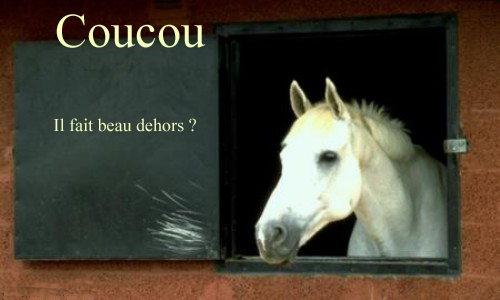 Carte d 39 anniversaire a imprimer cheval coleteremelly blog - Cheval rigolo ...