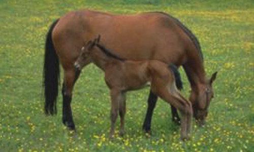 Carte cheval et poulain - Coloriage cheval et poulain ...