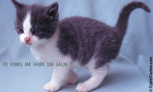 Chaton calin