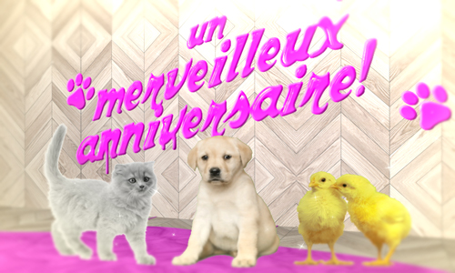 image animaux anniversaire