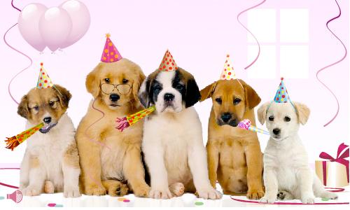 anniversaire chien rigolo