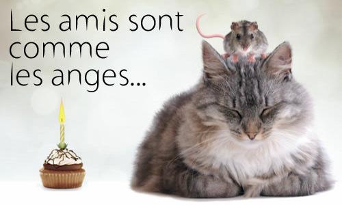 Carte Amitie Et Tendresse Pour Son Anniversaire Cybercartes Com