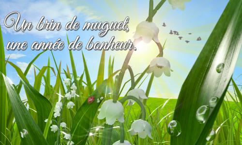 Cartes 1er mai muguet envoyez une carte 1er mai muguet gratuite - Image muguet 1er mai gratuit ...