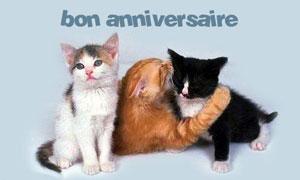 Bon anniversaire, mon chaton !