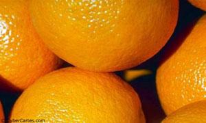 Oranges à gogo !