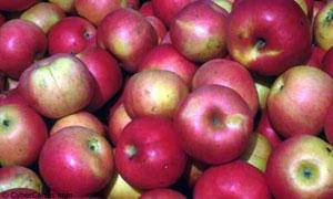 Pommes de reinette et ...