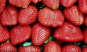 C'est la saison des fraises !