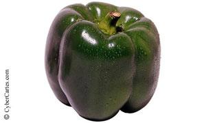 Un poivron vert