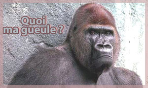 Quoi ma gueule ?