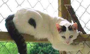 Chat blanc & noir