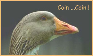Coin...Coin !
