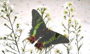 Papillon et marguerite
