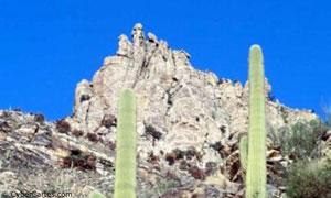 Cactus dans le canyon