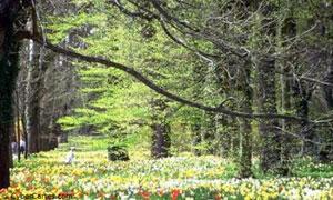 Forêt en fleur