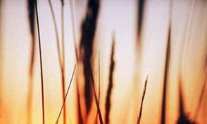 Coucher de soleil sur les blé