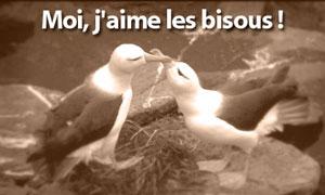 Des bisous !