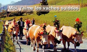 Vaches suisses
