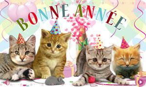 Bonne Année - chats