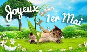 Du muguet et un chaton pour le 1er mai