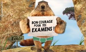 Bon courage pour tes examens !