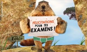 Félicitation pour tes examens !