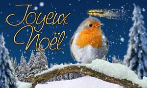 Joyeux Noël - oiseau