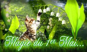 Muguet du 1er mai - chaton