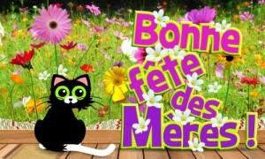 Fête des mères, des fleurs et un petit chat