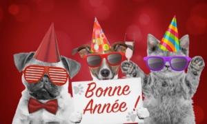 Les amis fêtent la nouvelle année