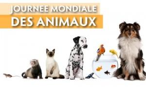 Journée des animaux