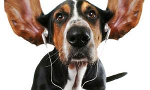 carte anniversaire chien parlant