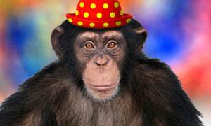 Faites parler le singe