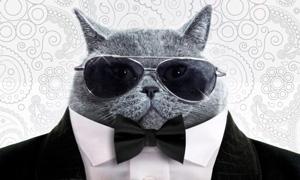Faites parler le chat mafieux