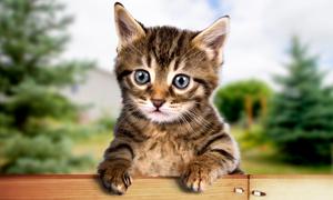 Le petit chat mignon