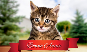 Le petit chat vous souhaite ses voeux
