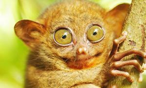 Un tout petit singe